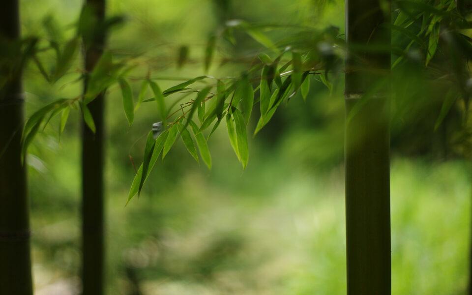 bamboe boxershort voor heren
